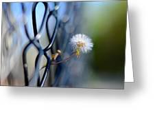 Dandelion Wish Greeting Card by Laura Fasulo