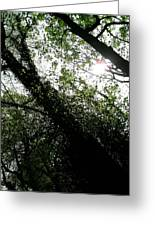 Dappled Forest Greeting Card by Patrick J Murphy