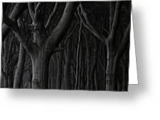 Dark Forest Greeting Card by Heiko Koehrer-Wagner