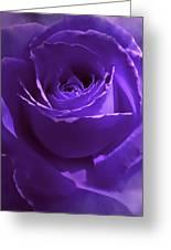 Dark Secrets Purple Rose Greeting Card by Jennie Marie Schell