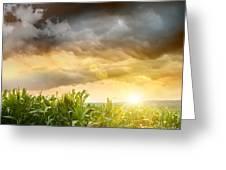 Dark Skies Looming Over Corn Fields  Greeting Card by Sandra Cunningham