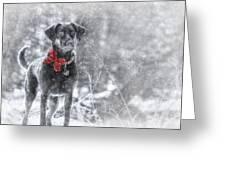 Dashing Through The Snow Greeting Card by Lori Deiter