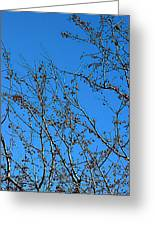 Dave's Blue Sky Greeting Card by Joseph Yarbrough