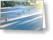 Davis Ducks Greeting Card by Cadence Spalding
