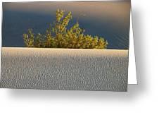 Dawn Mesquite Greeting Card by Joe Schofield