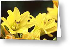 Day Lilies Greeting Card by Joe Klune