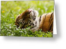 Daydreamer Greeting Card by Ashley Vincent