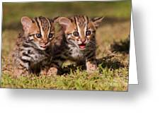 Dazed And Confused Greeting Card by Ashley Vincent