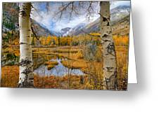 Dazzling Fall Foliage Greeting Card by Mark Whitt