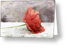 Decor Poppy Red Greeting Card by Priska Wettstein