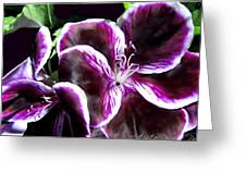 Deep Purple Vibrant Flower Macro Greeting Card by Danielle  Parent