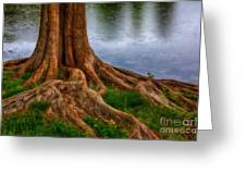 Deep Roots - Tree On North Carolina Lake Greeting Card by Dan Carmichael