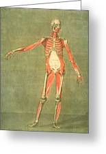 Deeper Muscular System Of The Front Greeting Card by Arnauld Eloi Gautier D'Agoty