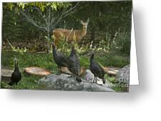 Deer And Wild Turkeys Greeting Card by Ron & Nancy Sanford