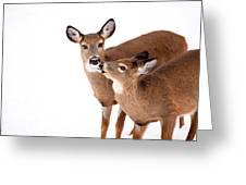 Deer Kisses Greeting Card by Karol  Livote