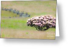 Delicate Meadow - A Tranquil Moments Landscape Greeting Card by Dan Carmichael