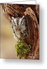 Delighted By The Eastern Screech Owl Greeting Card by Inspired Nature Photography By Shelley Myke