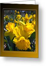 Delightful Daffodils Greeting Card by Patricia Keller