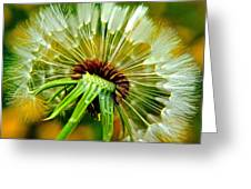 Delightful Dandelion Greeting Card by Frozen in Time Fine Art Photography