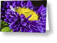 Delights the Eye Greeting Card by Christi Kraft