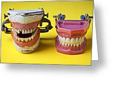 Dental Models Greeting Card by Garry Gay