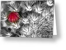 Desert Bloom Bw Greeting Card by C Ray  Roth