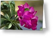 Desert Rose  Greeting Card by Saija  Lehtonen