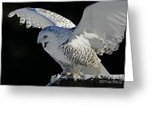 Destiny's Journey - Snowy Owl Greeting Card by Inspired Nature Photography By Shelley Myke