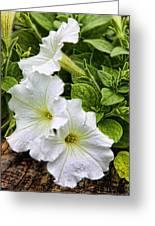 Detailed White Petunias Greeting Card by Linda Phelps