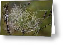 Dew Drops Spider Web Greeting Card by Christina Rollo