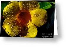 Dew Trumpet Greeting Card by Greg Patzer