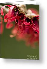 Diana The Hamamelis Greeting Card by Anne Gilbert