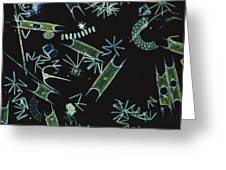 Diatoms And Dinoflagellates Greeting Card by D P Wilson