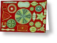 Diatoms-ernst Haeckel Greeting Card by Scott Camazine