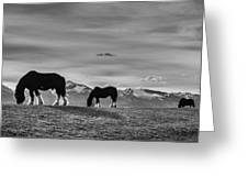 Dick's Horses Greeting Card by Dianne Arrigoni