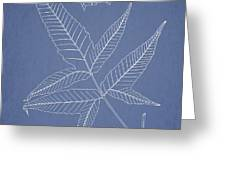 Dictyopteris barberi Greeting Card by Aged Pixel