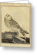 Die Stein Eule Or Church Owl Greeting Card by Philip Ralley
