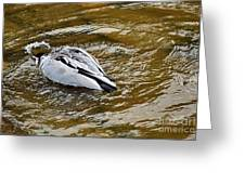 Diving Duck Greeting Card by Kaye Menner