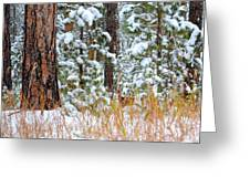 Do You See Me Greeting Card by Clarice  Lakota