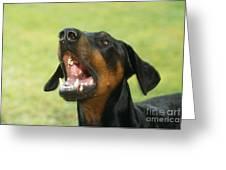 Doberman Pinscher Dog Greeting Card by John Daniels