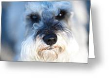 Dog 2 Greeting Card by Wingsdomain Art and Photography