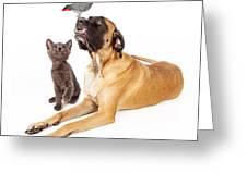 Dog And Cat Looking At A Bird Greeting Card by Susan  Schmitz