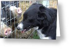 Dog And Pigs Greeting Card by Kathy Bassett