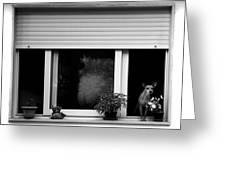 Dog In A Window Greeting Card by Fabrizio Troiani