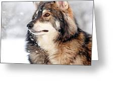Dog In The Snow Greeting Card by Grant Glendinning