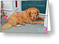 Dog In Waiting Greeting Card by Eva Kaufman