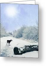 Dog Looking Back Greeting Card by Amanda Elwell