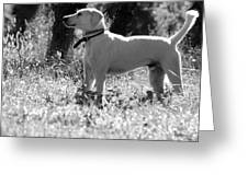 Dog On Guard Greeting Card by Kathleen Struckle