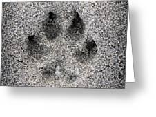 Dog paw print in sand Greeting Card by Elena Elisseeva