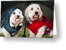 Dogs Under Umbrella Greeting Card by Elena Elisseeva